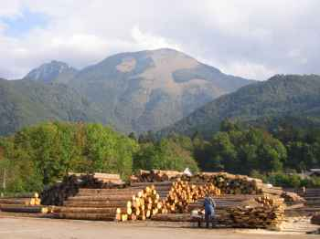 The sawmill at Jelovica